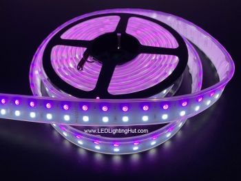 Double Row RGB+Cool White 5050 LED Strip, 120/m, 24V, 5m Reel