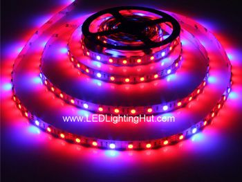 Red Blue LED Grow Plant Flexible 5050 LED Strip, 60 LEDs/m, 5m, 12VDC