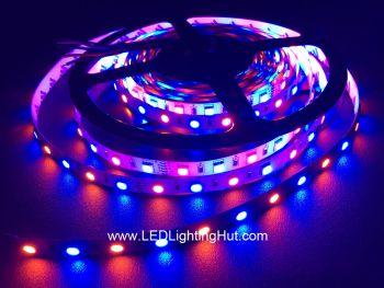 RGBA (RGB+Amber) 5050 LED Light Strip, 60/m, 12V/24V, 5m Reel